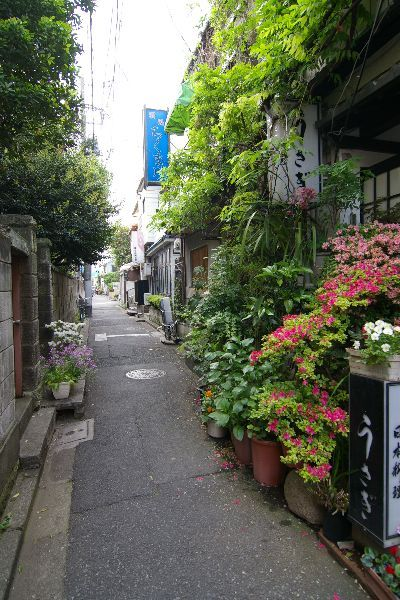 Nezu, Taito city, Tokyo 根津の路地裏ガーデニング