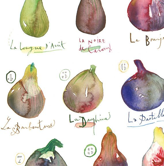 Kitchen art Fig watercolor painting Fruit poster by lucileskitchen