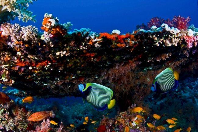 Os mares possuem um rico ecossistema marinho. Foto: Kadu Pinheiro