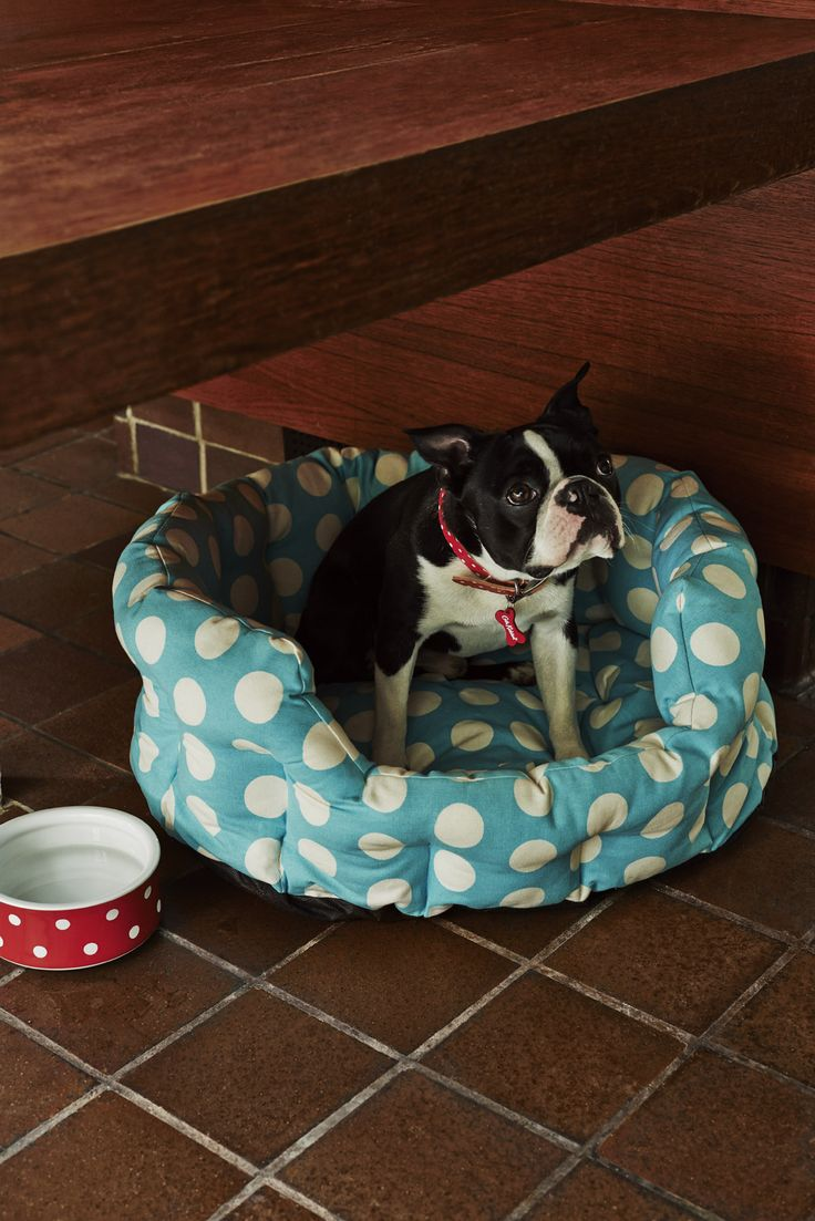 Puppies like birthday treats too... pleeeease? | #CathKidston