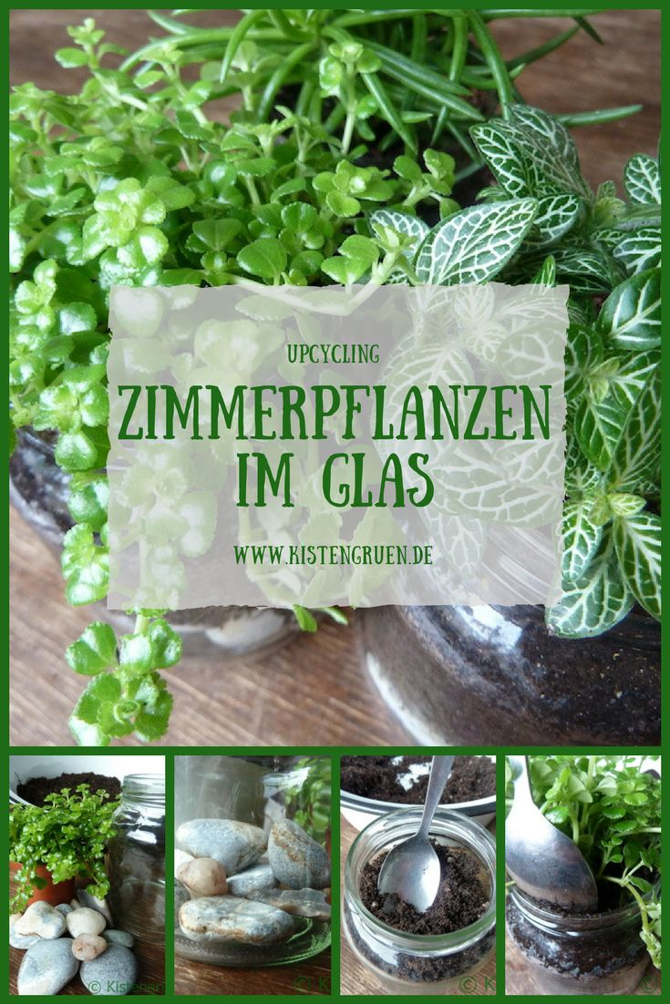 Zimmerpflanzen im Glas. Schöne Idee zur Dekoration mit Zimmerpflanzen als Urban Jungle #UrbanJungle #Zimmerpflanzen #Übertopf
