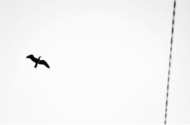 Deja volar tu imaginación y haz de tu vida un sueño y no sueñes con una vida #photograph #photographer #me #blackandwhite #blancoynegro #animal #libertad #imaginación #reallife