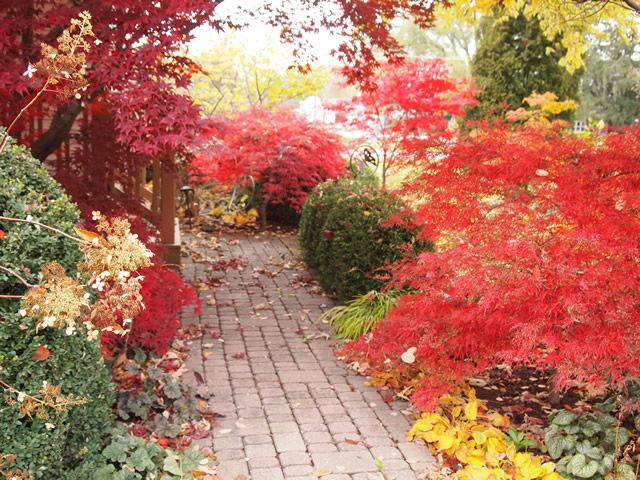 Fall color along the garden path from Fine Gardening magazine