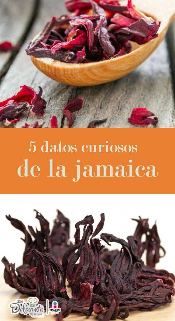 datos curiosos flor de jamaica | CocinaDelirante