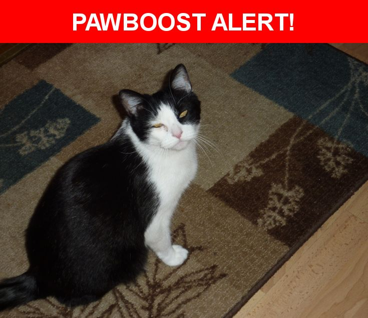 Please spread the word! Pandacat was last seen in San Diego, CA 92119.  Message from Owner: Our sweet boy is missing.  He usually always comes when called, but we haven't seen him in several days.  He is a bit of a scaredycat, but very sweet and affectionate.  Please help us get him back home.  Nearest Address: Near Lake Alamor Ave & Lake Murray Blvd