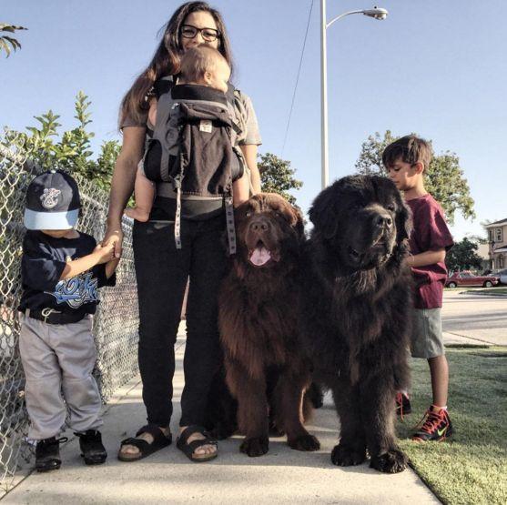 成長すると80キロ越えッ!!「世界一デカイベビーシッター」な超大型犬2匹がいる家族の日常がめちゃくちゃ楽しそう!