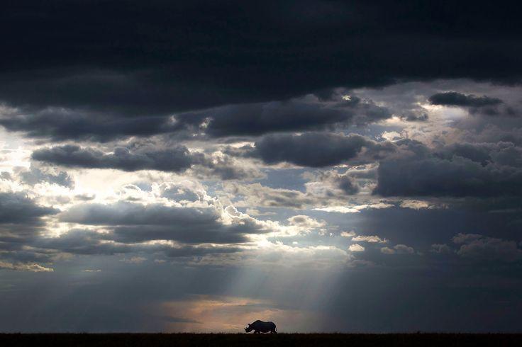 """Follow the sun"" in Maasai Mara National Reserve, Kenya ©Björn Persson"