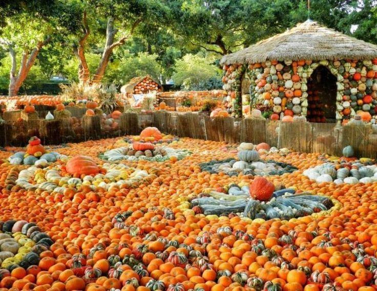 http://ru.esosedi.org/US/TX/1000476256/botanicheskiy_sad_i_dendrariy/  Ботанический сад и дендрарий – #Соединённые_Штаты_Америки #Техас #Даллас (#US_TX) Замечательное место для прогулки и образования