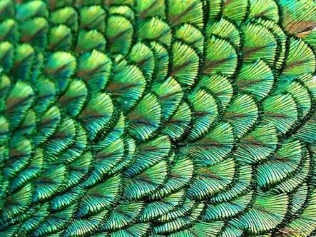patterns from nature - Google Search