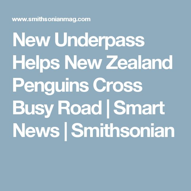 New Underpass Helps New Zealand Penguins Cross Busy Road      |     Smart News | Smithsonian