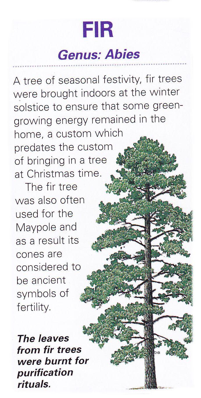 Sacred celtic tree - Fir