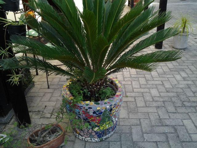 Outside in the garden. Pot plants