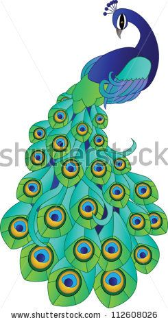 Vector Peacock by Lauren Murray, via ShutterStock