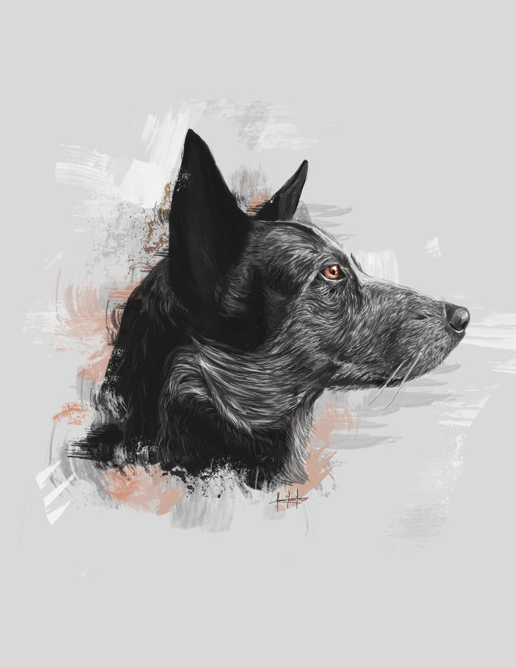 #ilustracion #illustration #art #drawing #dog