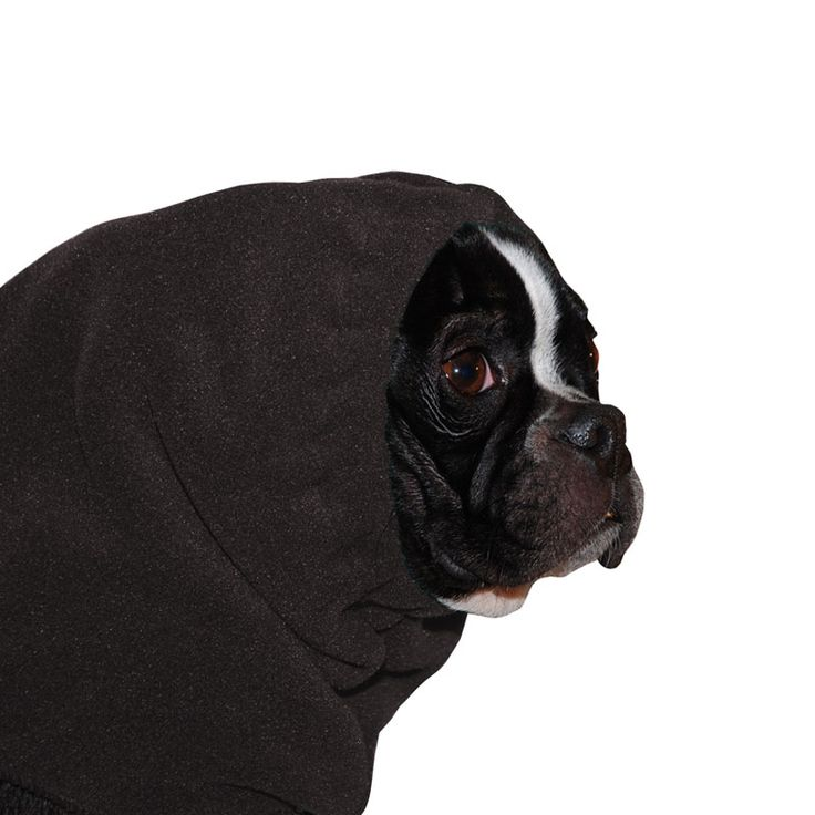 Black Boston Terrier Dog Hood, great for warmth and laying with our dog rain coat. High performance material. Made in the USA.