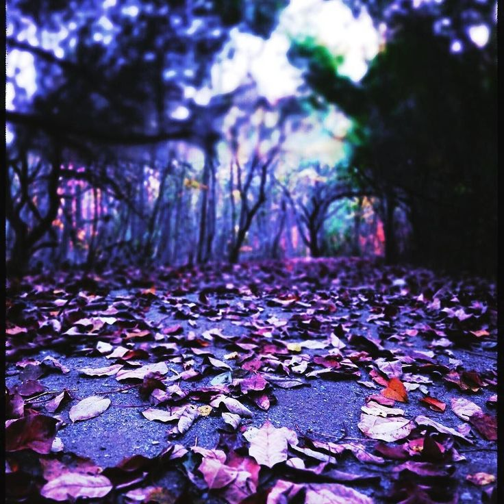 #ambiance #Forest #jfdupuis #colors