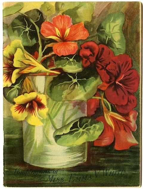 "A casual arrangement of nasturtium in a simple glass is found on the front cover of Emma V. White's 1917 catalog.  Emma V. White called herself the ""North Star Seedswoman"" and had her first mailing in 1896. She produced catalogs with colorful, hand painted covers aimed at woman customers."