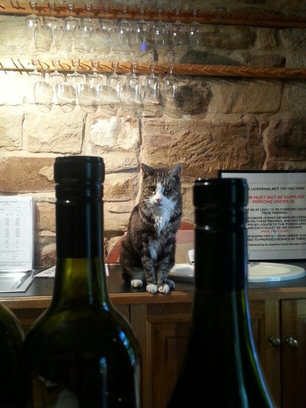 Sideways the cat @ Jeanneret winery at Clare