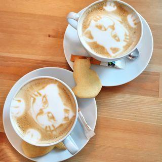Cafe Miao: Lidt for alternativt at dele kaffekop med en kat..