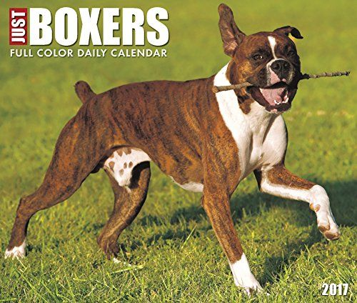 Just Boxers 2017 Box Calendar (Dog Breed Calendars)  Brand new officially licensed calendar  Keep track of time in style all year long  Ships quickly and safely in a protective envelope