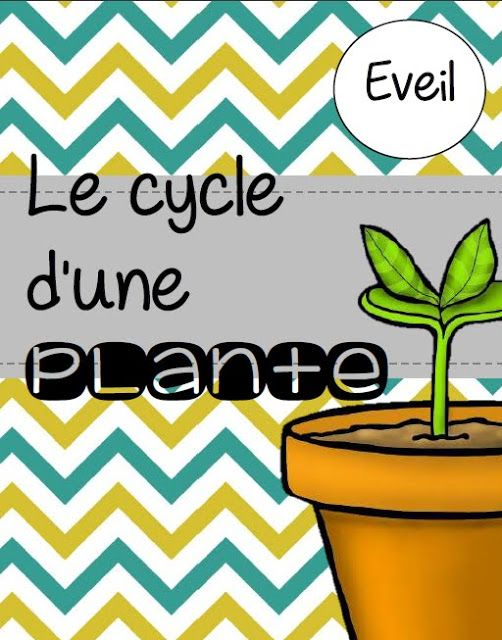 La classe de Laura: Le cycle d'une plante