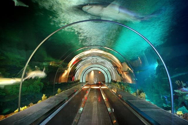 Shark Tube at SeaWorld San Diego