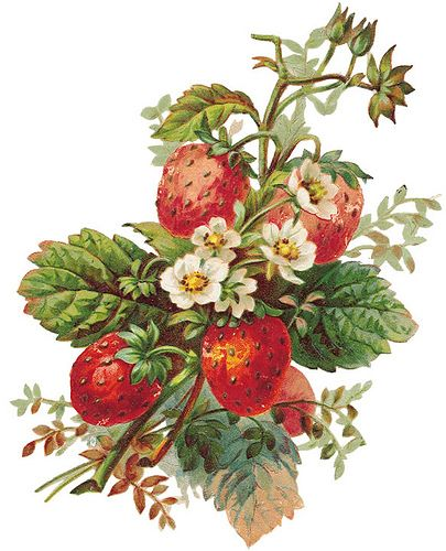 strawberry-free by Sassy Bella Melange, for jar labels