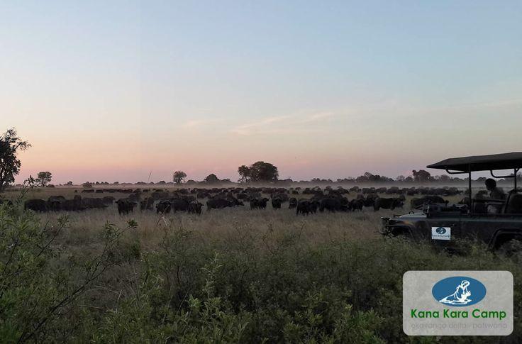 Kana Kara Camp - http://www.kana-kara.com
