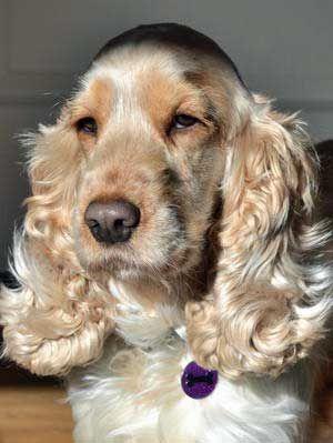 ¿Quieres un montón de nombres únicos perro de la muchacha para su nuevo perrito pequeño Cocker?