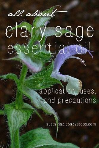 Clary Sage Essential Oil: Uses, Benefits, and Precautions, via http://SustainableBabySteps.com