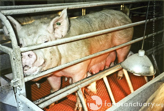 Top 5 Ways to End Factory Farming