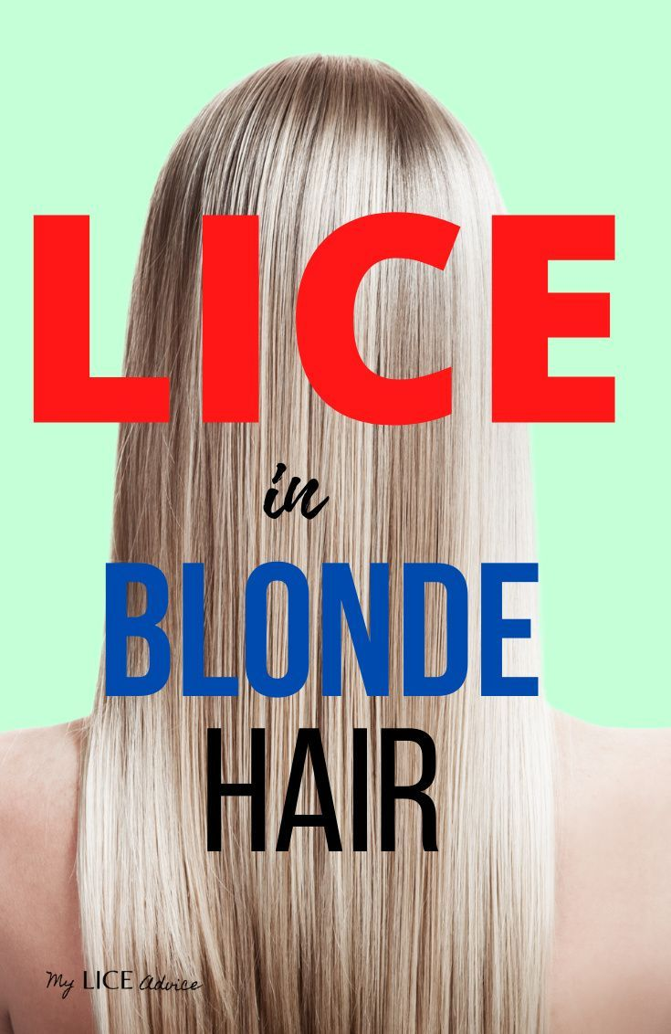 Lice In Blonde Hair Lice Eggs Pictures And Unique Challenges In 2020 Blonde Hair Hair Lice Lice Eggs