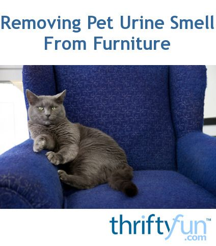 This is a guide about removing pet urine smell from furniture. If you have a pet urinate on your furniture you know how difficult it is to clean up. Even if you get to it right away the smell can still linger for a longtime afterward.