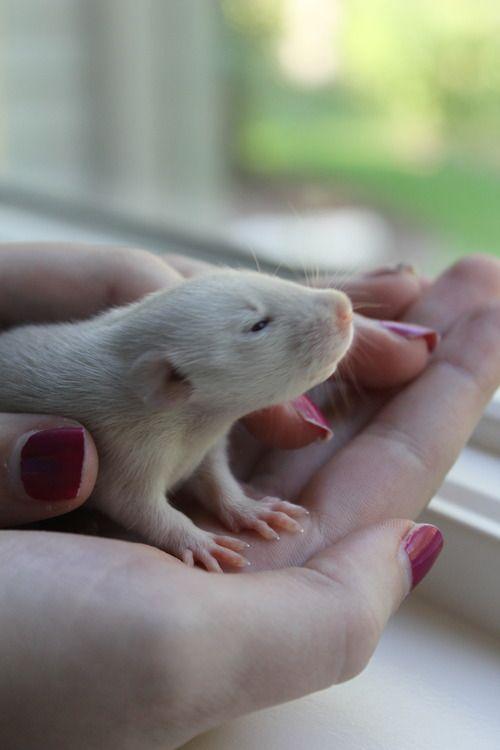 petsmart fancy mice care guide