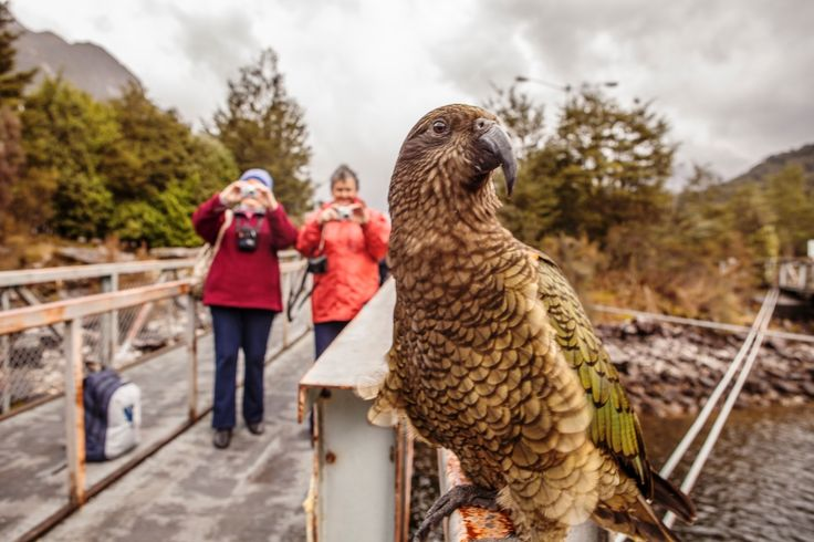 Watch out for our security Kea