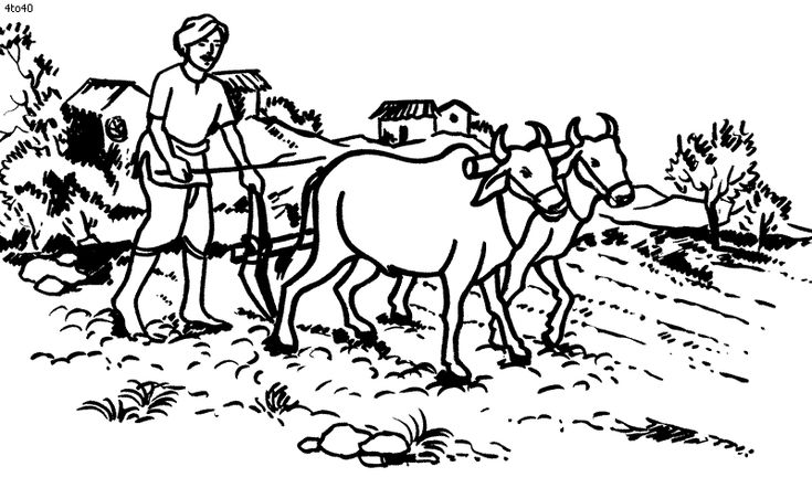 Image result for indian farmers in india drawings