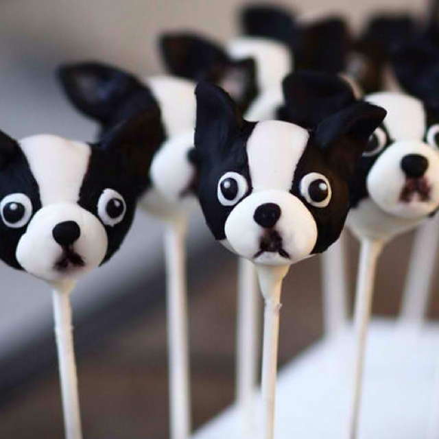 Boston Terrier cake pops. Making these for my grandma