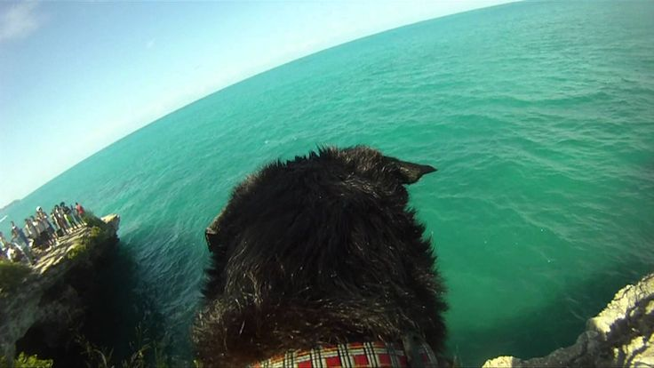 Super dog Lily takes to the cliffs with the Falling of the Rock boys in Bermuda.
