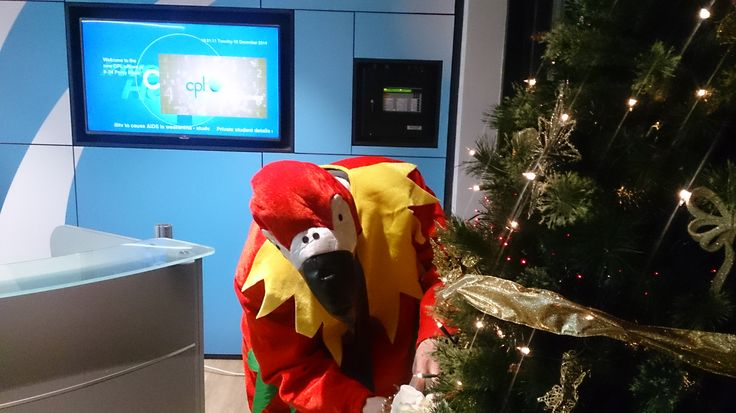 Robbie even volunteered to help with the Cpl Christmas tree, we think he was looking for crackers… #TheCplParrot