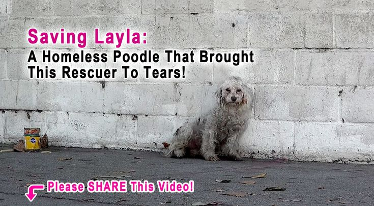 Rescuer Was Brought To Tears When A Homeless Poodle Did The Sweetest Thing.  Please make a small donation & help us continue saving lives: http://www.rescuefromthehart.org Apply to adopt Layla at http://www.rescuefromthehart.org Speci...