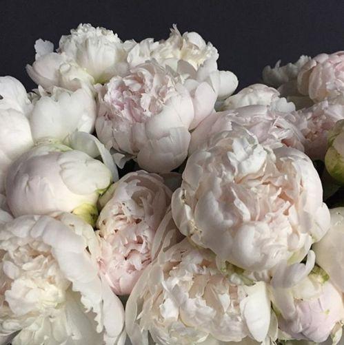 Le fleuriste du Four Seasons Beverly Hills Kris Jenner