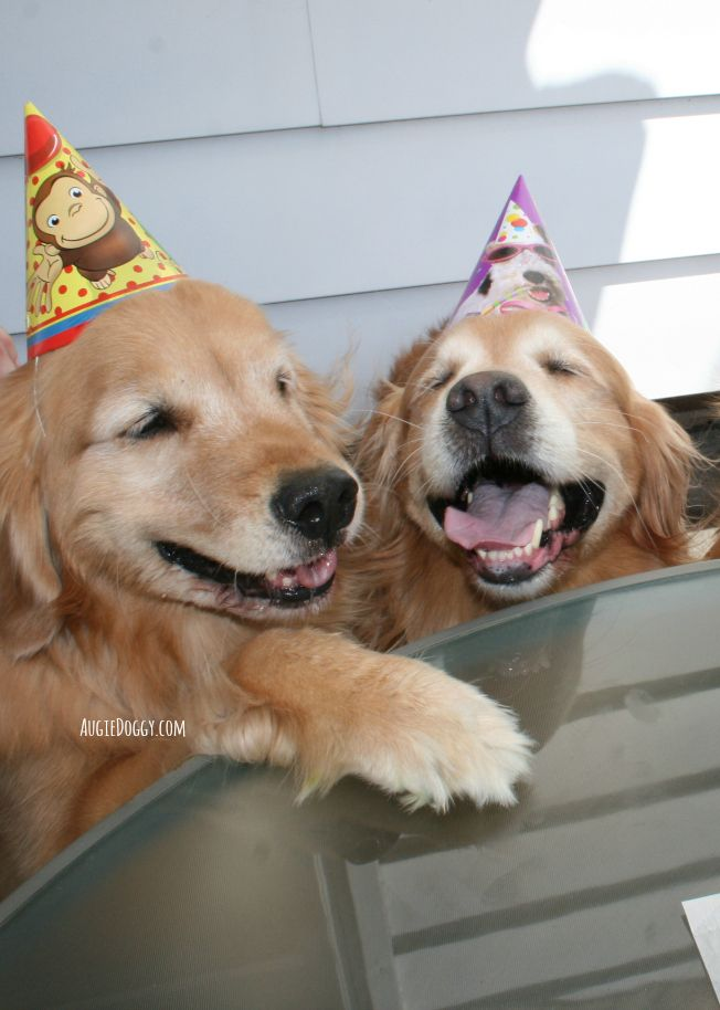 308ca75f288 Let's get this party started! #goldenretriever #birthday | Goldens ...