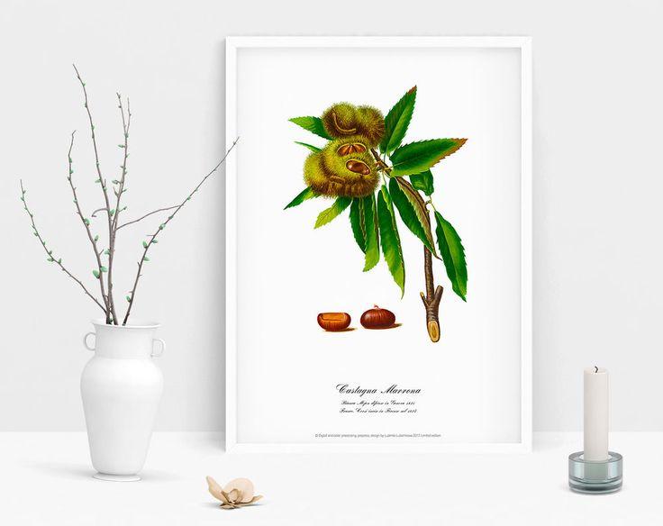 Watercolour art print brown chestnut Botanical art poster vintage wall decor #Vintage
