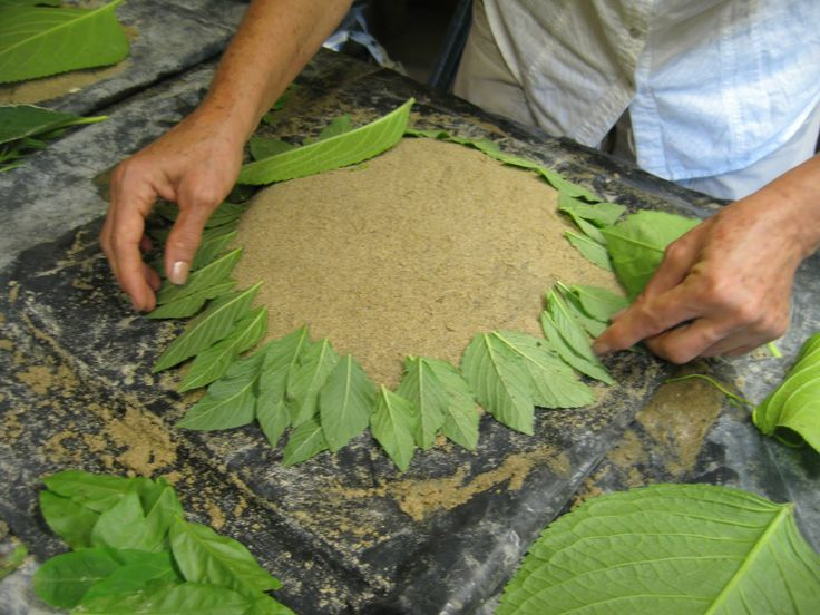 How Do You Make Hypertufa | Lois paid special attention to arranging the fine-leaves creating a ...