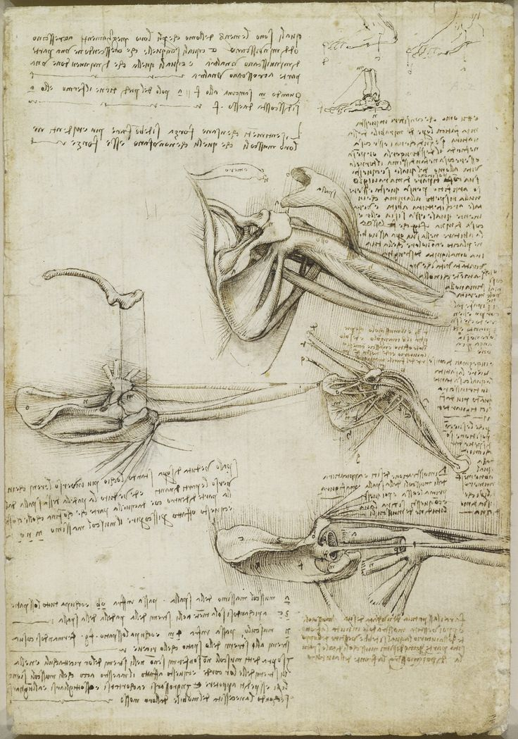 The Royal Collection: Recto: The bones and muscles of the shoulder. Verso: The superficial anatomy of the shoulder an