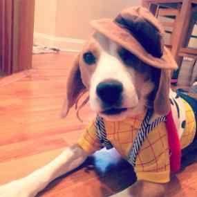 #pets #halloween beagle #cute #dogs #adorable