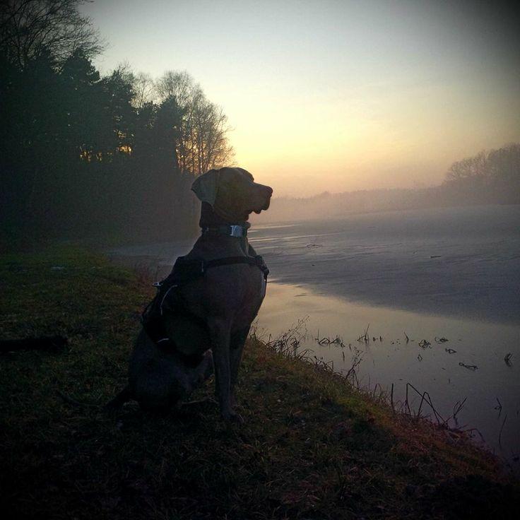 #icedog