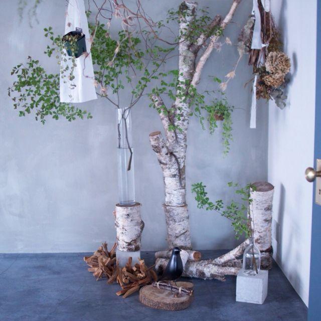 hamakajiさんの、ドライオタク(*´_ゝ`),NO GREEN NO LIFE,白樺の丸太,ドウダンツツジ,リビング,のお部屋写真