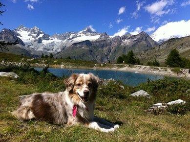 Cody & Co. - hundemarkt.ch - Bio Hundefutter Shop