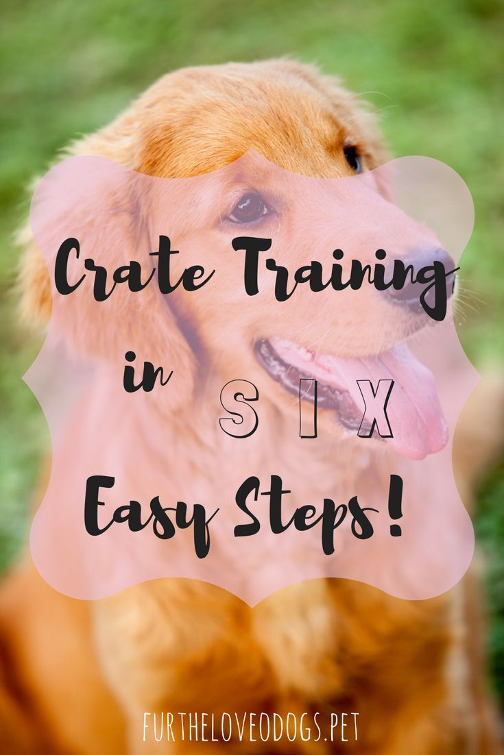 Training your dog for being in a crate is an invaluable tool when it comes to traveling with your dog, getting them used to being at the groomers or being boarded, or helping your dog overcome their separation anxiety. And the best part is, it doesn't hav